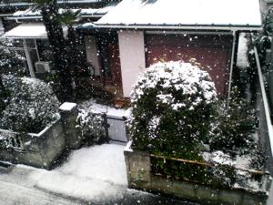 yuki_01.jpg